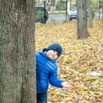 Мальчик в синей куртке, выглядывает из-за дерева в осеннем парке