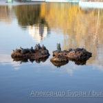 Черепашки залезли камень в пруд