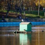Дом для уток в середине пруда в осеннем парке - Украина, Одесса, 17,10,2019