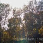 Деревья и небо в осеннем парке