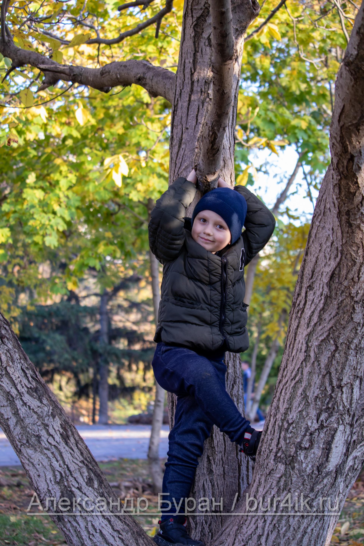 Шесть-летний мальчик на дереве в осеннем парке