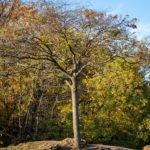 Дерево на горе в осеннем парке
