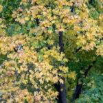 Желтые листья на дереве в парке осенью